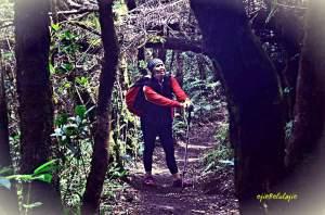Hutan menuju Lembah Surken(album Ricky merah)