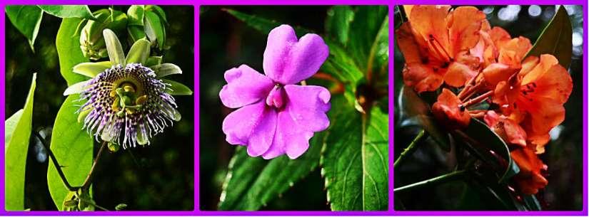 Bunga cantik banyak diabadikan oleh Kangmang Kresna(album Ricky merah)