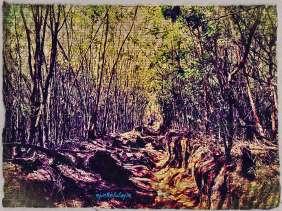 Vegetasi Gunung Lawu. Tumbuhan yang saling kait, berhubungan satu sama lainnya meneduhkan para pendaki via Cemoro Kandang
