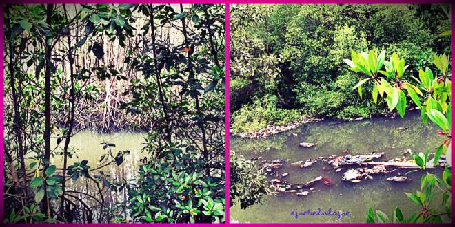 Mangrove yang jauh dari khayalanku(doc Hikmah)