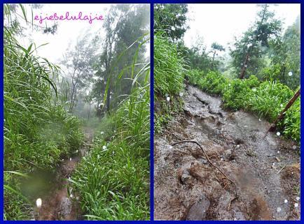 jalur Selo yang diambil ketika turunan dan hujan cukup deras. (doc pribadi)