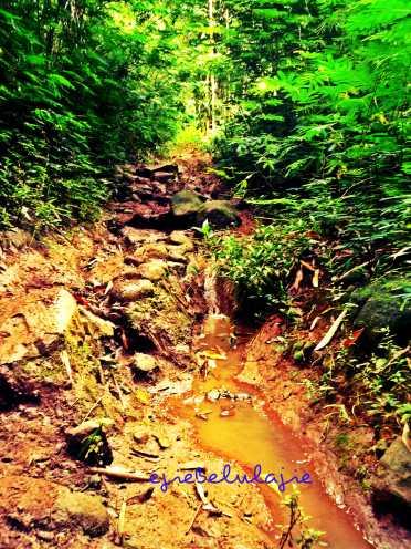 Jalur hutan bambu (doc pribadi)