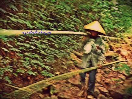 Ibu pengumpul bambu yang melintas gesit di depan saya. memotretnya sekilas dan...... goyang! upps... (doc pribadi)