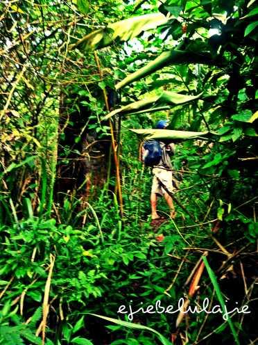 Jalur hutan yang mulai merunduk. (doc pribadi)