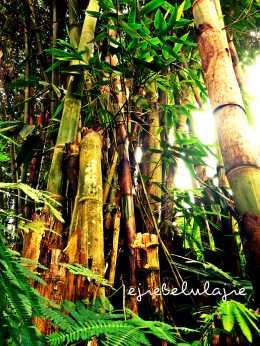 The bamboo (doc pribadi)