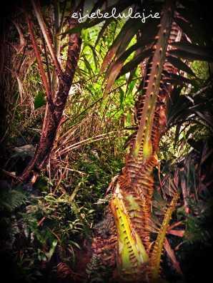 Tumbuhan berduri yang juga Ejie temui di Gunung Puntang, ada disini. (doc pribadi)