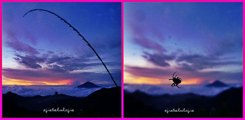 Menangkap laba-laba yang menikmati sejuknya pagi. (doc pribadi)