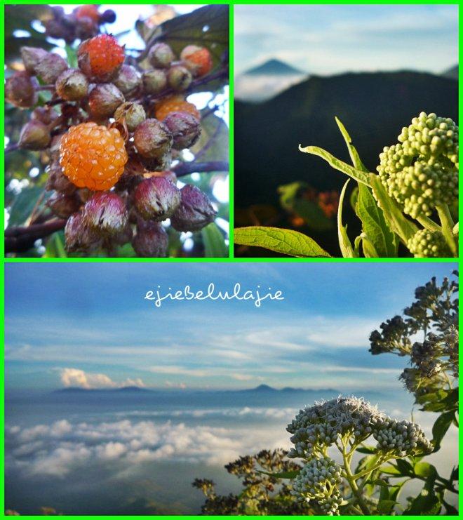 Arbei orange yang asam manis segar, cikuray dibalik bunga apa itu dan deretan gunung dalam bentangan awan. (doc pribadi)