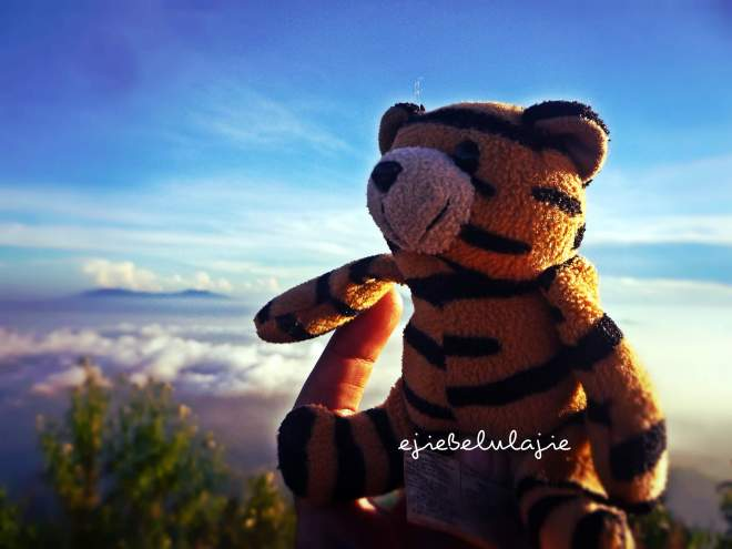 Tiger blue, my 3rd travelmate. (doc pribadi)