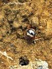 Ini kumbang? Imut ya? Ejie ketemu hewan-hewan kecil di Sindoro. (doc pribadi)