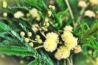 Bunga seperti ini hampir mendominasi menuju pos 3. Apa namanya? (doc pribadi)