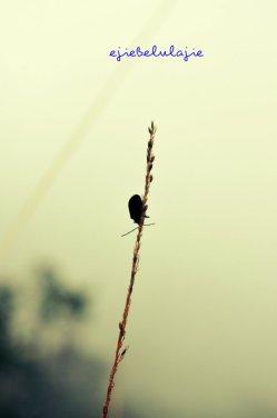 Kumbang lainnya yang nangkring di ilalang pos 3 (doc pribadi)