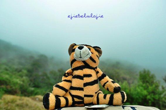 My tiger blue take a rest @pos 3. Menunggu kabut menepi. (doc pribadi)