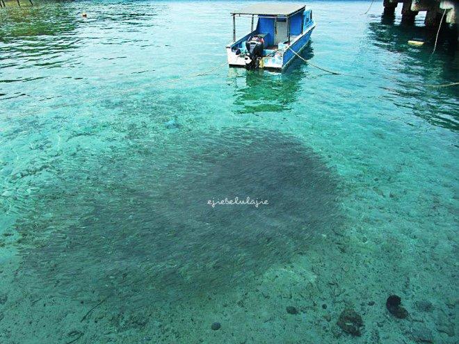 Pemandangan tosca dengan gerombolan ikan di bawah dermaga Saonek. (doc pribadi)