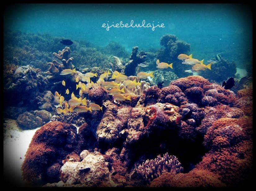 Indahnya Indonesia ;) (doc Kak Agus, Palembang)