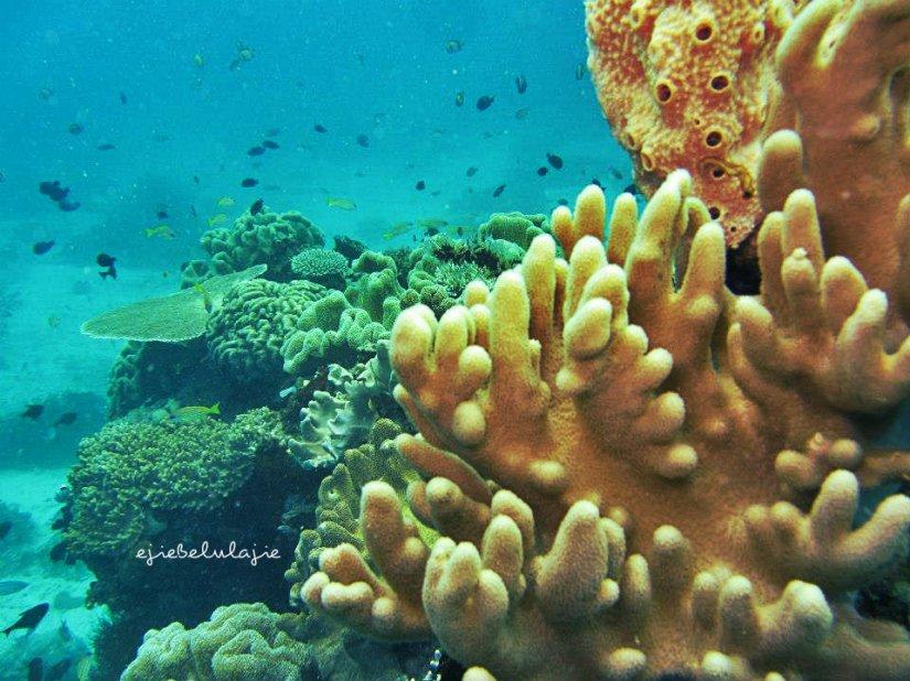 Terumbu karang di kedalaman 5 meter. (doc pribadi)