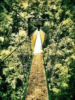 The canopy trail (doc pribadi)