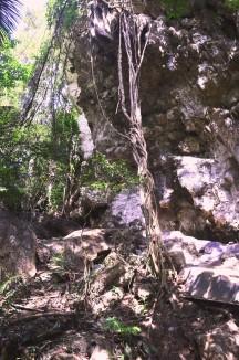 Batu dan tanaman merambat disekitar perjalanan ke gua Istana dan Mimpi. (doc pribadi)