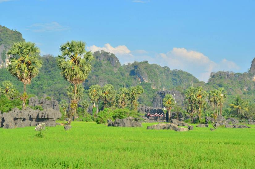 Jajaran Hutan Bukit Karst (doc pribadi)