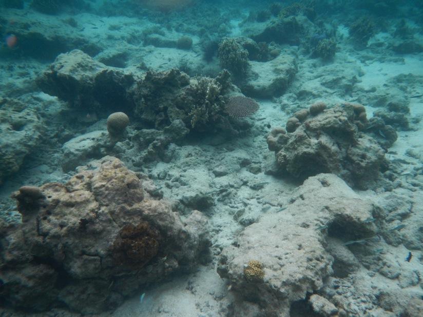Spot snorkeling pertama yang karangnya putih. (doc by Catur backpanginer.com)