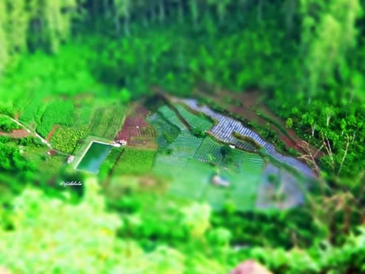 Pengambilan petakan sawah dengan tema art dari kameraku. (doc pribadi)