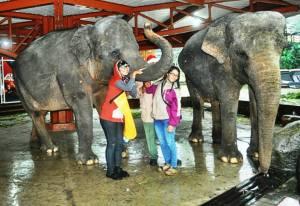 Foto bareng Kavri, Lintang dan teman gajah lainnya. (Doc pribadi)