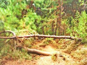 Pohon tumbang yang melintang di jalur. (doc pribadi)