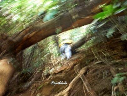 Ngga fokus kan lihat mereka... Padahal mau foto batang yang tumbang deh. Salah jepret! :D (doc pribadi)
