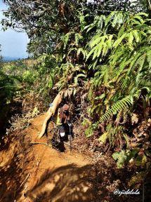 Nyelip di balik batang tumbang. (doc pribadi)