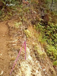 Jalur si pita merah muda. (doc pribadi)