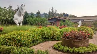 Taman bunga berlatar patung kuda dan muka depan. Doc pribadi