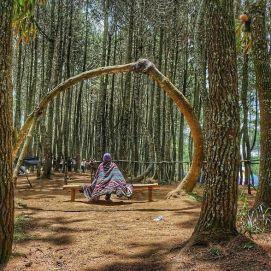 Spot foto pohon lengkung di Gunung Putri Lembang, Bandung. Doc Linda, taken by Kapten Nemo