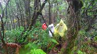 Jalur hutan menuju puncak. Doc Yunita R