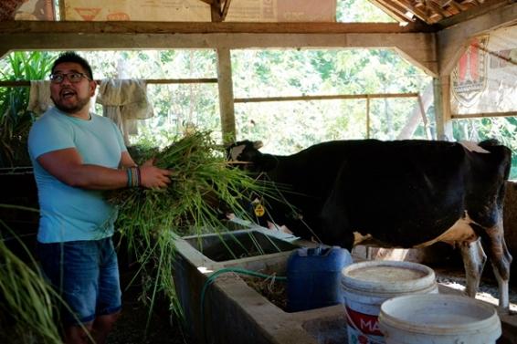 Koko @kopertraveller yang tengah memberi makan sapi. Doc @kulkasgendong