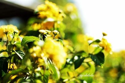 Ceria di Taman Kasmaran Doc pribadi