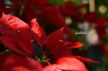 Bunga yang cantik di Taman Kasmaran dan Pasar Bunga Kalisari Doc pribadi